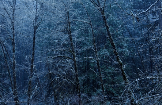 Dark_snowy_forest