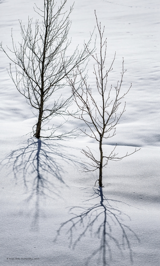 2small_trees_snow
